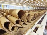 Трудности с сырьем испытывает новое предприятие по производству картона в Шымкенте