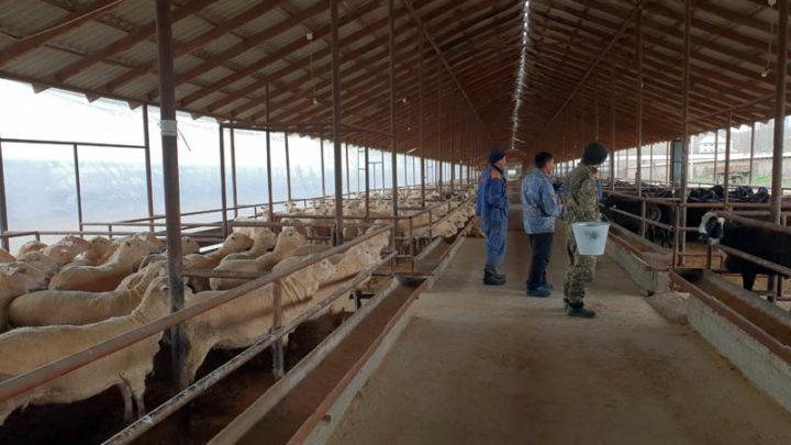 За два месяца предприятие «Сапа-2002» экспортировало мяса больше, чем за весь прошлый год