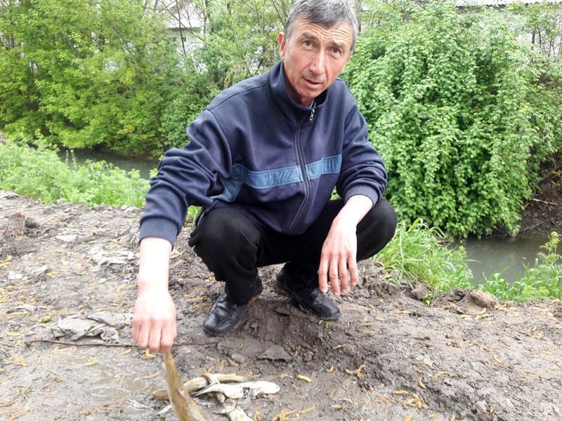 Экологи Шымкента обещают через 5 дней установить причину гибели рыбы в Кошкарате