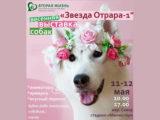 Весенняя выставка собак пройдет в Шымкенте