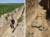 200 животных в Туркестанской области попали в смертельную ловушку