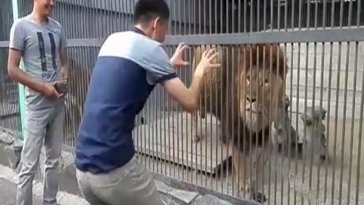 В Караганде разыскивают парней, которые кидали камни во львов в зоопарке