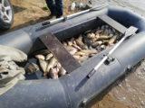 Почти 100 кг рыбы выловил браконьер в Арысском районе