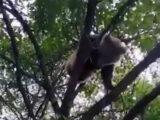 Медвежонок хозяйничал в саду жителя Тулькубасского района