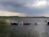 Молния убила десятки лошадей в Карагандинской области