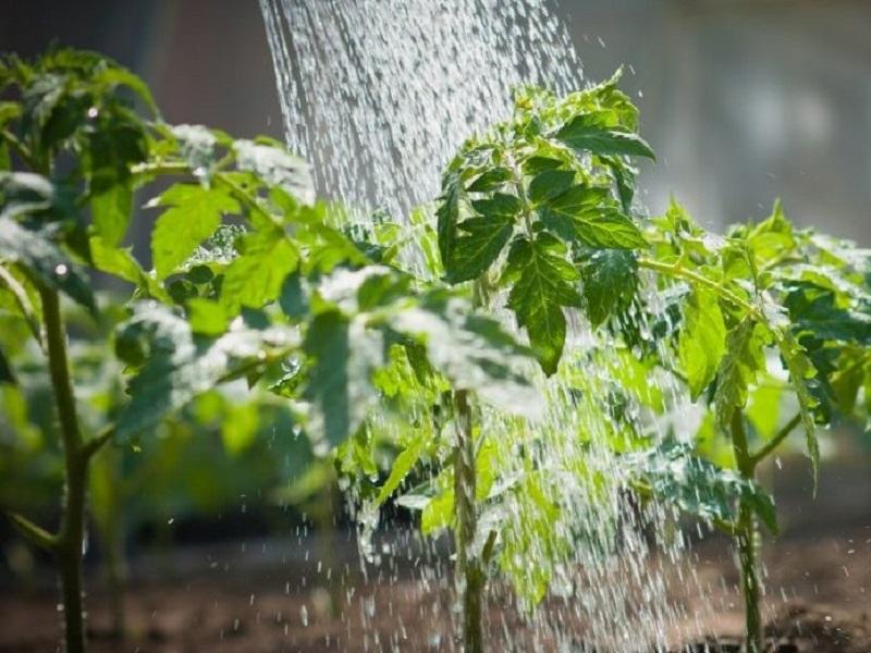 Без очереди будут получать поливную воду дехкане Созакского района