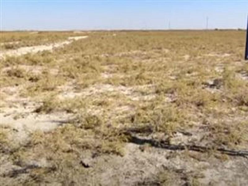 Особо охраняемые земли в Туркестанской области попали в собственность экс-акима