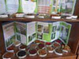 102 вида семян для посадки заготовили в дендропарке Шымкента