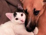 «Корзина добра» собирает средства на помощь животным