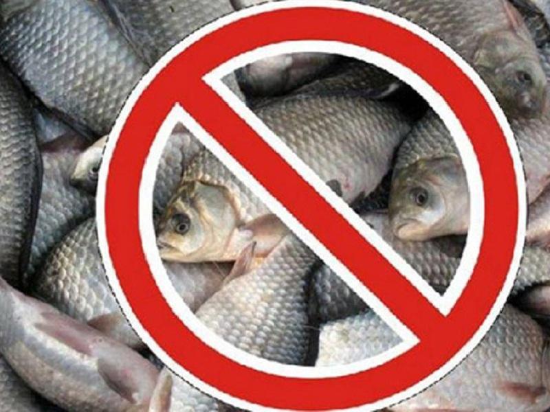 Запрет на рыбалку введен в Туркестанской области