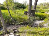 В дендропарке Шымкента на месте деревьев появится место для фастфуда
