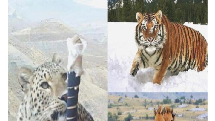 Три животных попали в Красную книгу Казахстана