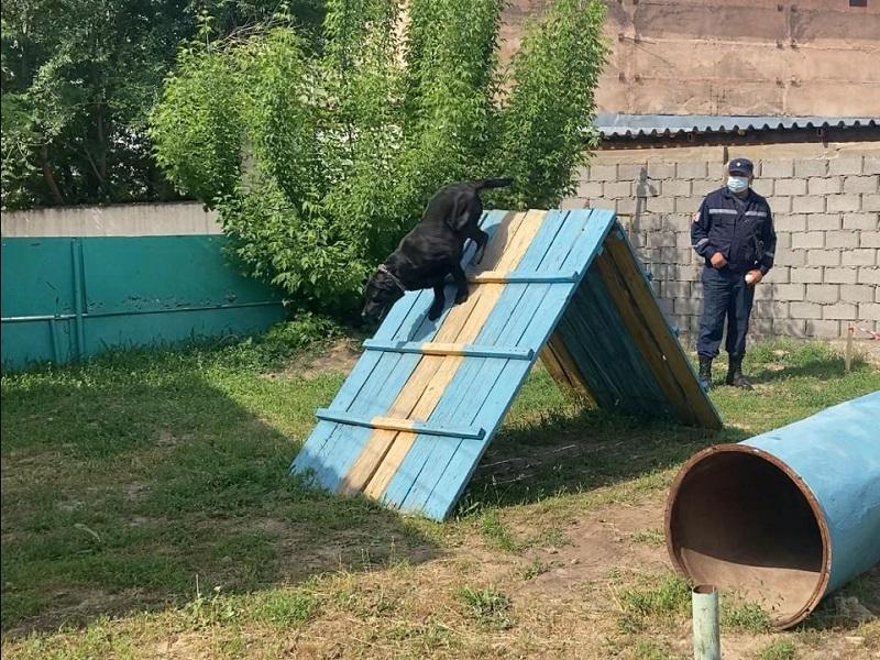 2 лабрадора получили допуск к операциям по спасению людей в Шымкенте