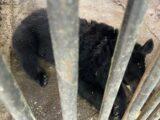 В Шымкенте временно эвакуировали посетителей из зоопарка