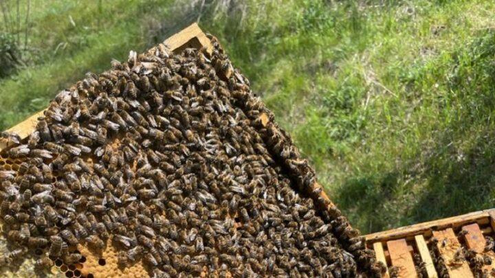 На 10% уменьшилось количество пасек в Шымкенте