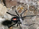 Каракурты, скорпионы и клещи кусают шымкентцев