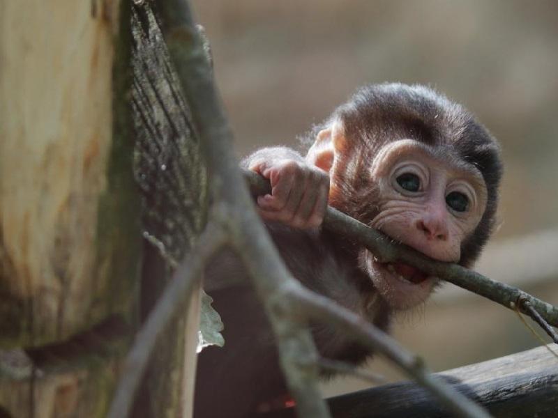 За обезьяну жителя Туркестанской области оштрафуют