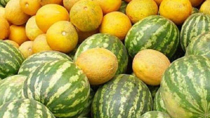 3 млн тонн овощей и бахчевых собрали в Туркестанской области