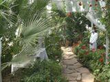Цитрусовые выращивают в школьной теплице в Шымкенте