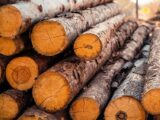 В Казахстане вводят запрет на лесоматериалы